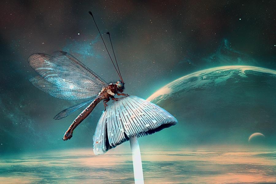 Сказочные фотографии насекомых от фотографа Syuwandi Sien