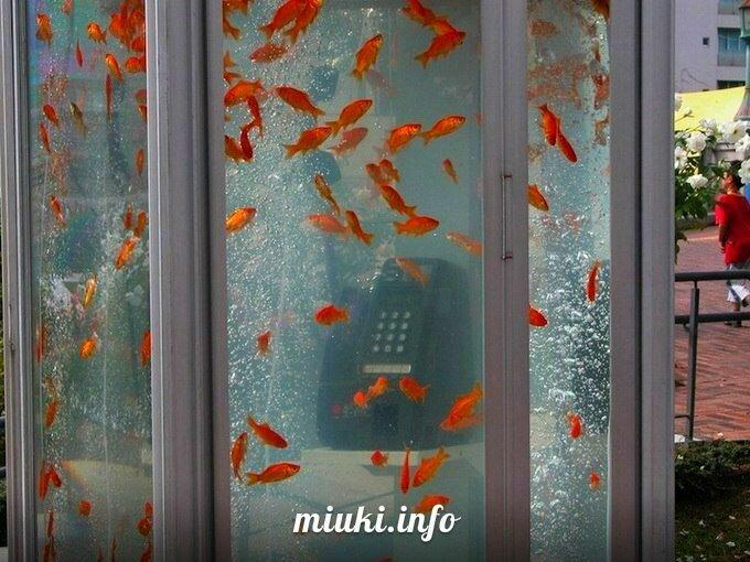 Золотые рыбки в телефонных будках Японии. Арт-проект Goldfish phone boot aquariums от дизайн-группы Kingyobu