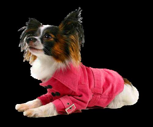 pink_lady_coat.png