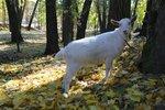 YQ2A4634.JPG Улыбка козы.