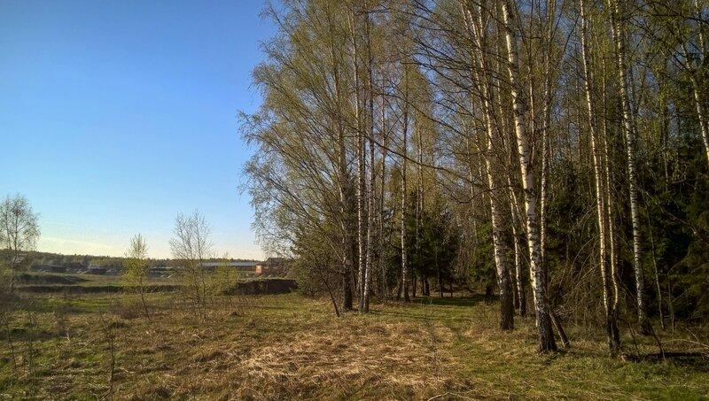 Опушка леса около Эквиленда
