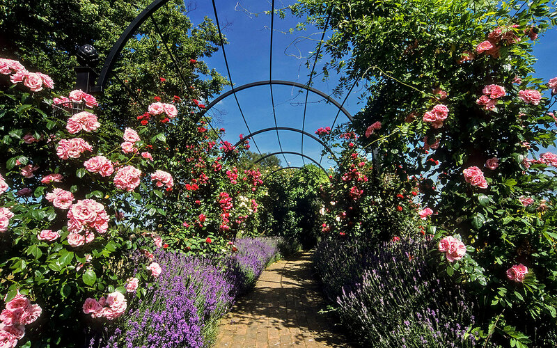 Royal National Rose Society Gardens - formerly 'The Gardens of the Rose', Hertfordshire, UK | Rose covered pergolas