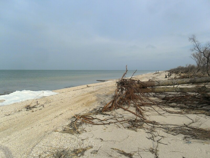 У моря, февраль ... SAM_5634.JPG