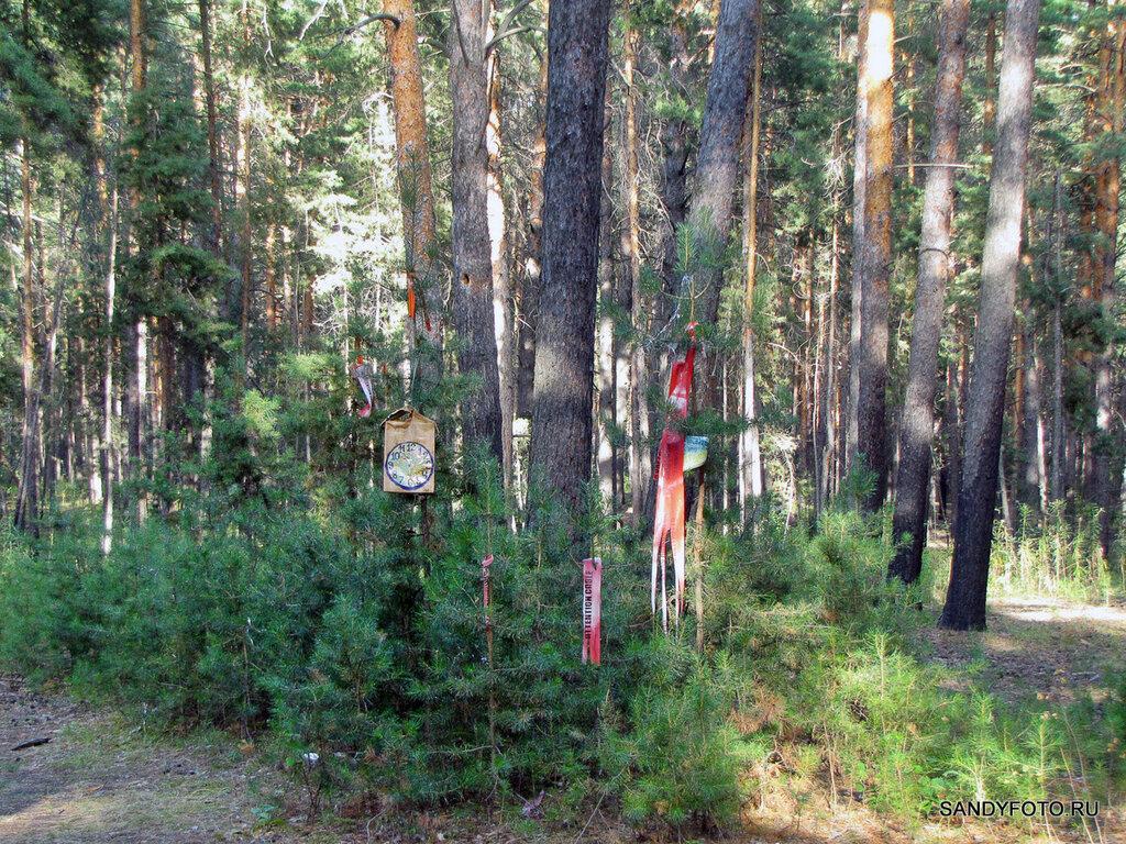 Старичок-лесовичок в троицком лесу на  ГРЭСе