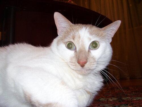 Кот в недоумении