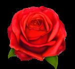 роза52.png