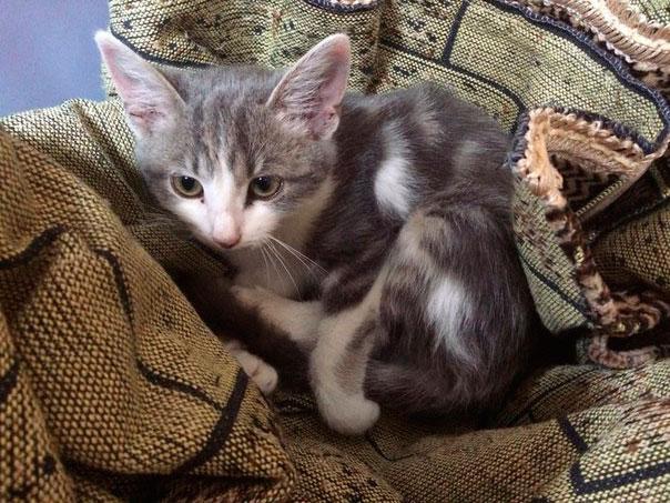 котенок нашел дом