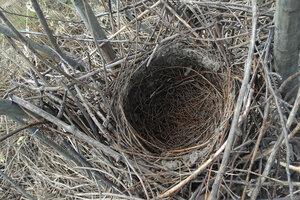 Старое гнездо
