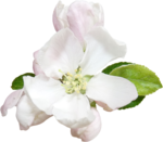 flower (6).png
