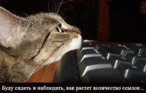 кошачий линкообмен