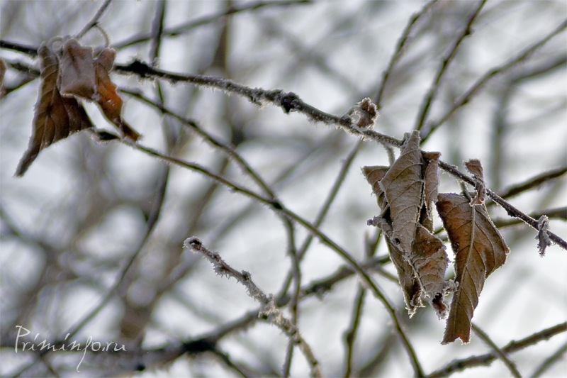 Лист на дереве