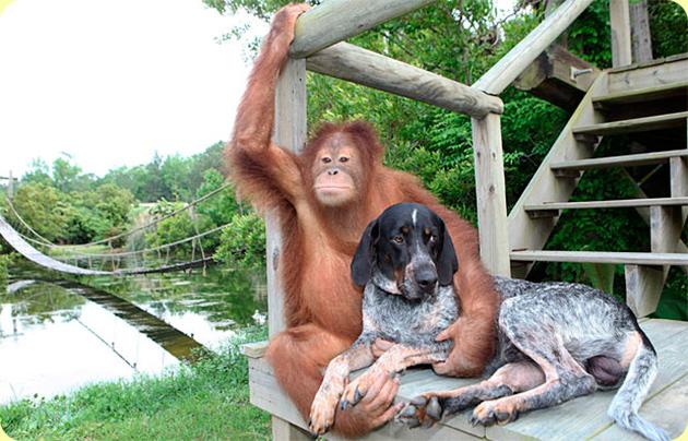 Этим животным Ничто человеческое не чуждо