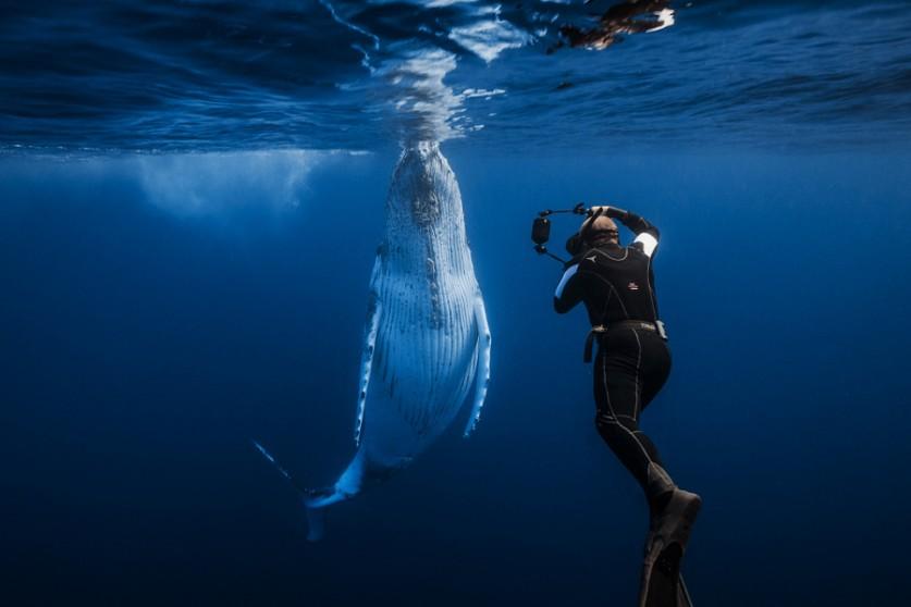 Каждый год горбатые киты приплывают из Антарктики в тёплые воды Индийского океана для спаривания. Эт
