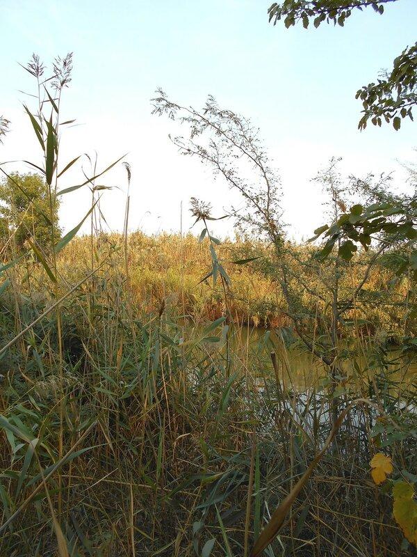 Берега канала в обильной растительности ... DSCN1425.JPG