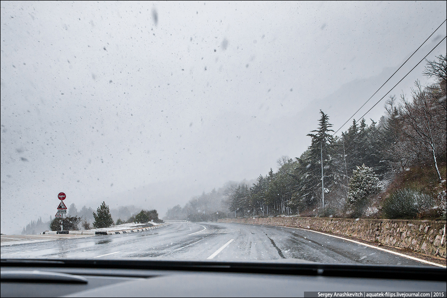 Крым. Цветы. Снег