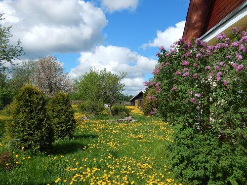 Сад некошеный