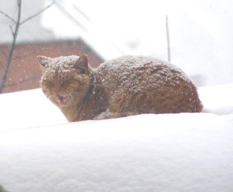 Песни на снегу.