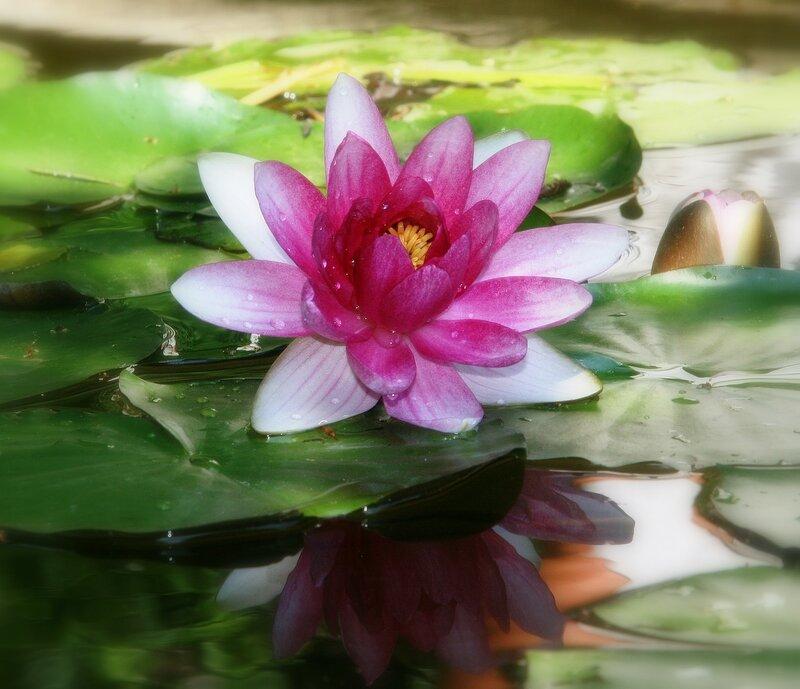 Красавица озер!