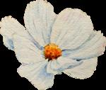 pld_W_FloralMix18_03