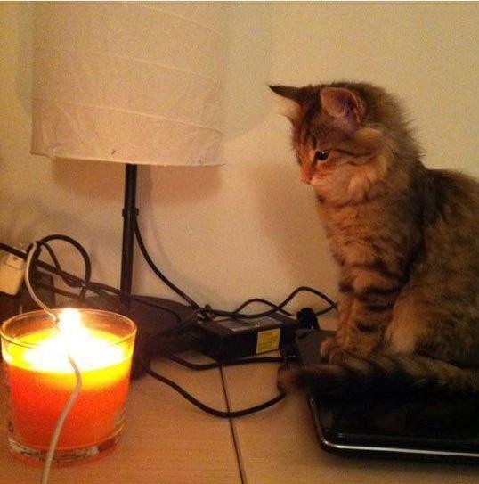 Фото приколы про кота и шнур зарядного