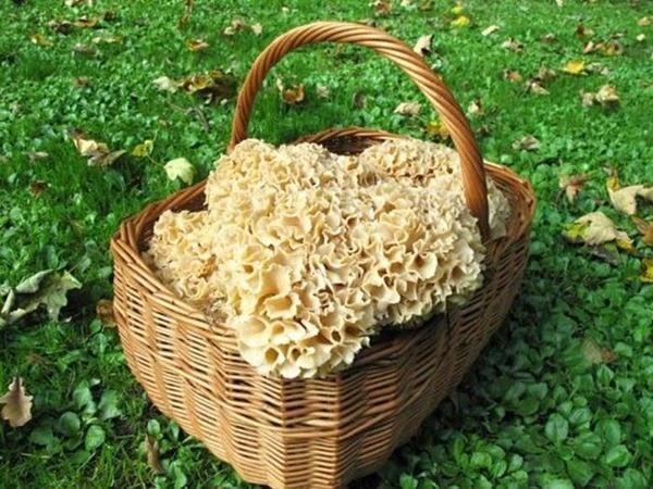 Самые интересные и необычные места для сбора грибов в разных странах 0 12d1a5 dbb1fc90 orig