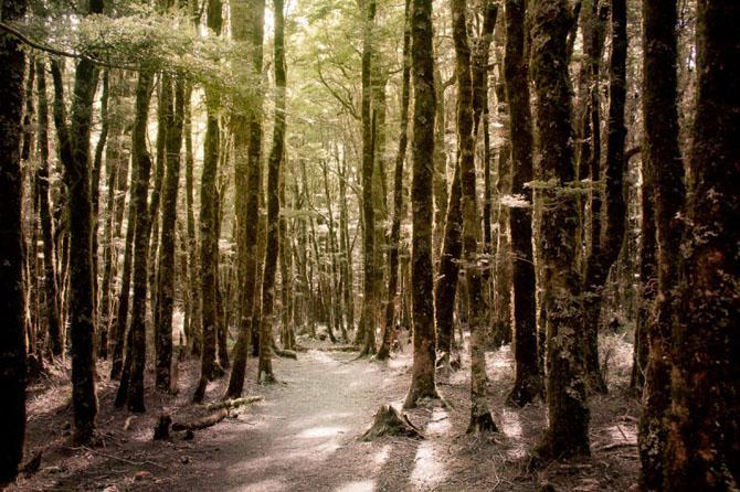 Elfijskie-lesa-Novoj-Zelandii-Stasa-Kulesha-31-foto
