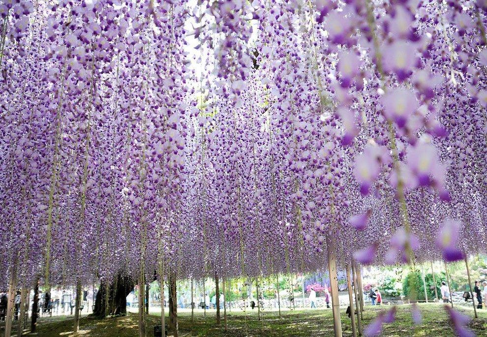 Фонтаны цветов