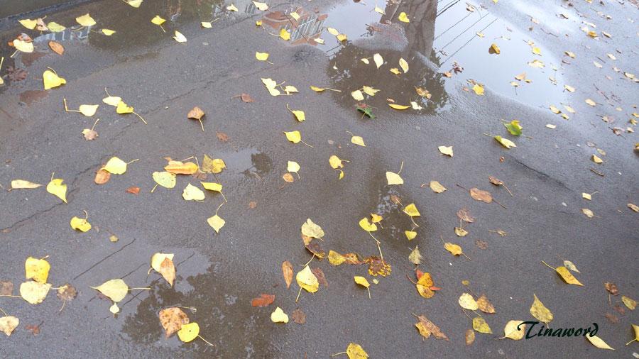 Дождь-0.jpg