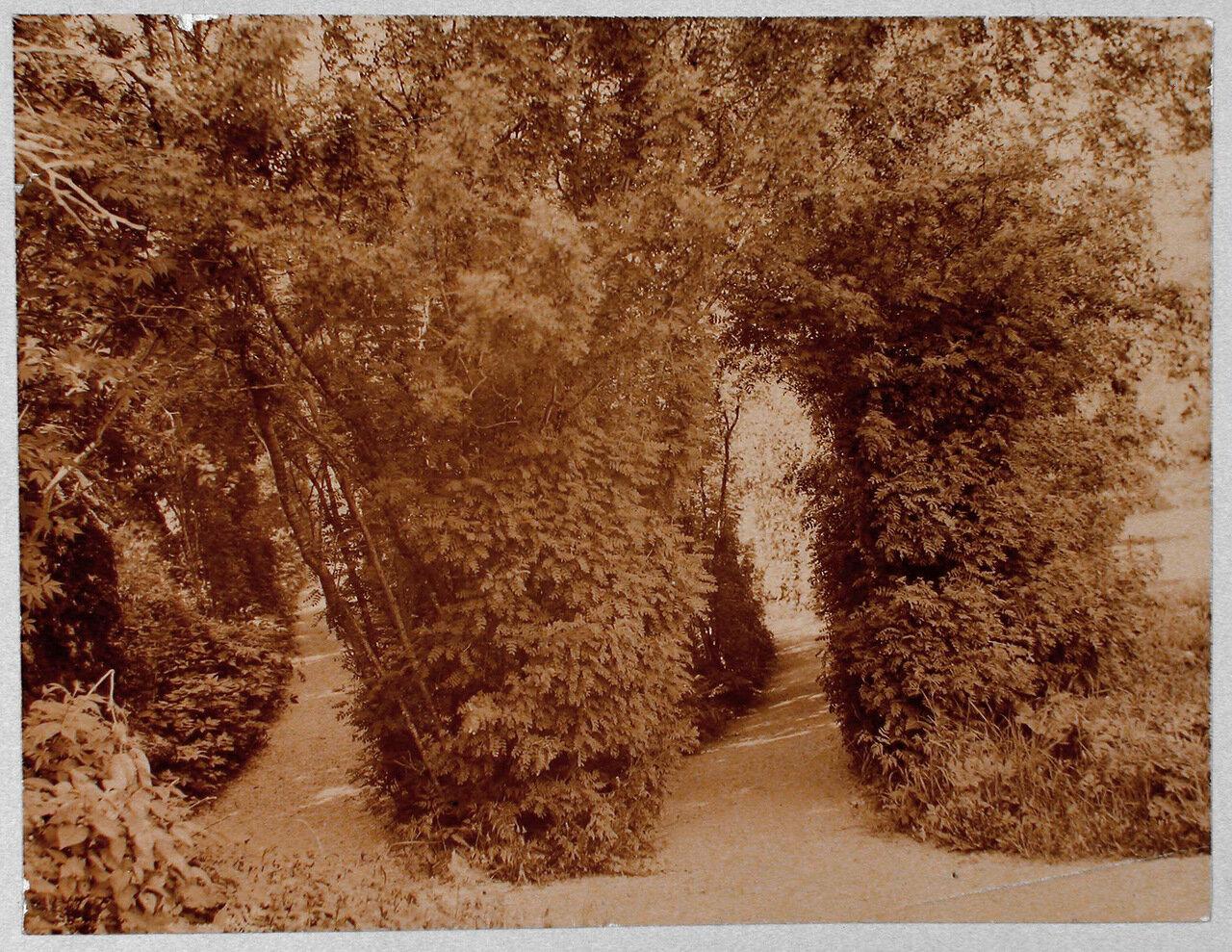 49. Уголок усадебного парка Монрепо