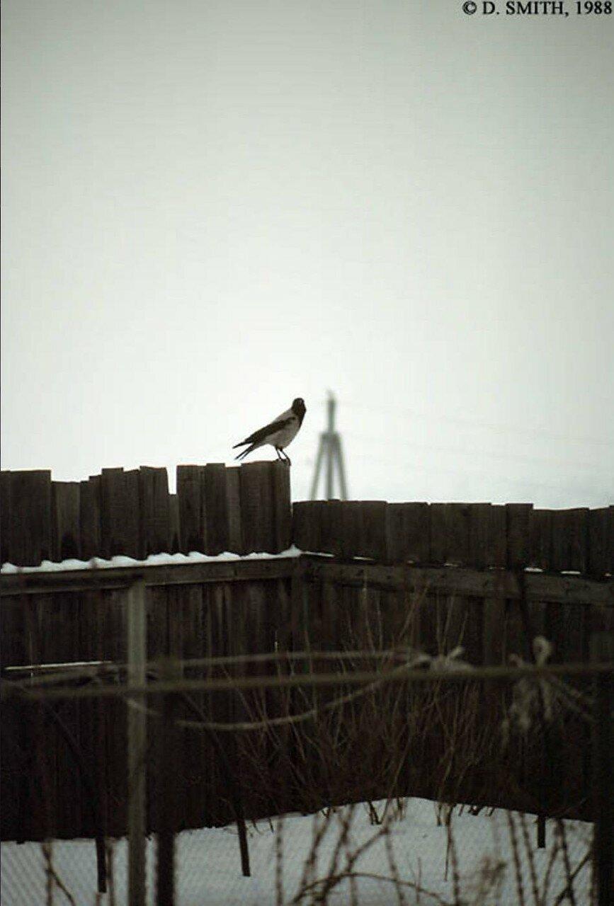Подмосковье. Птица сидит на заборе