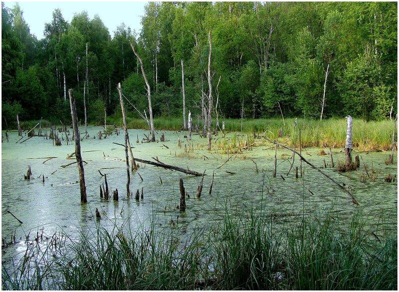 изображение болота: