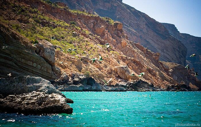 Socotra, Yemen, Сокотра, Йемен