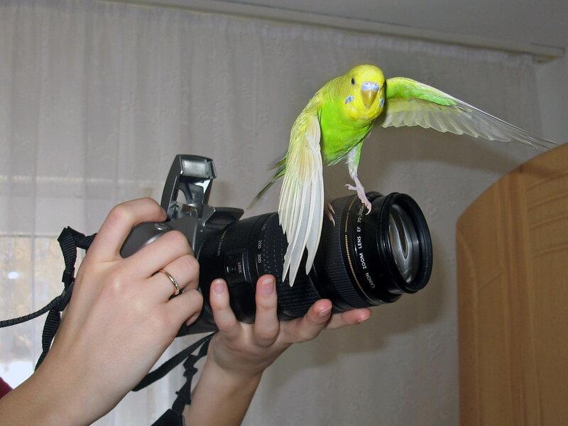 А вот и я, птичка!