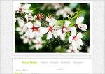 Дизайн для ЖЖ: Белые цветы (S2). Дизайны для livejournal. Дизайны для Живого журнала. Оформление ЖЖ. Бесплатные стили. Авторские дизайны для ЖЖ