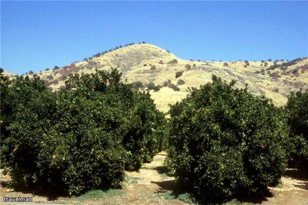 Калифорния без макияжа. 2008—2009 гг