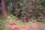 Дорога уходящая в лес над 3-м карьером