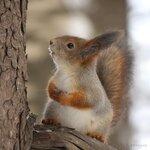Кто взял мои орешки?...