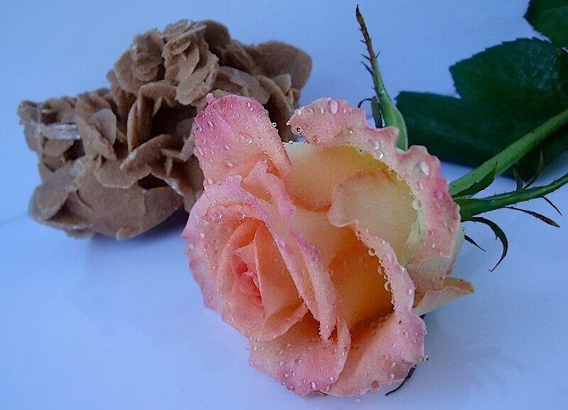 Две розы.