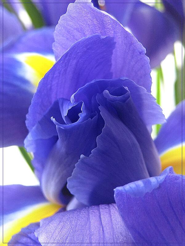 Цветочное настроение)