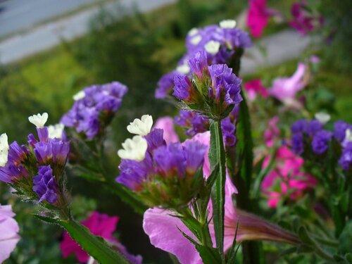 Блог флориста