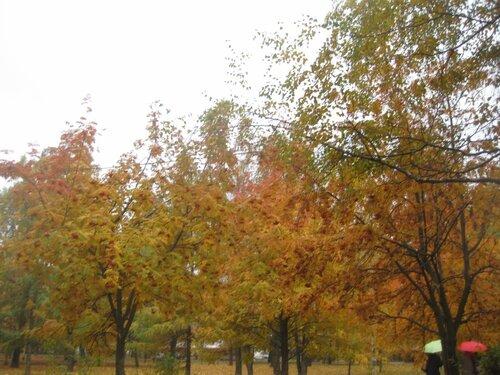http://img-fotki.yandex.ru/get/3213/131884990.6f/0_e576c_da797986_L.jpg