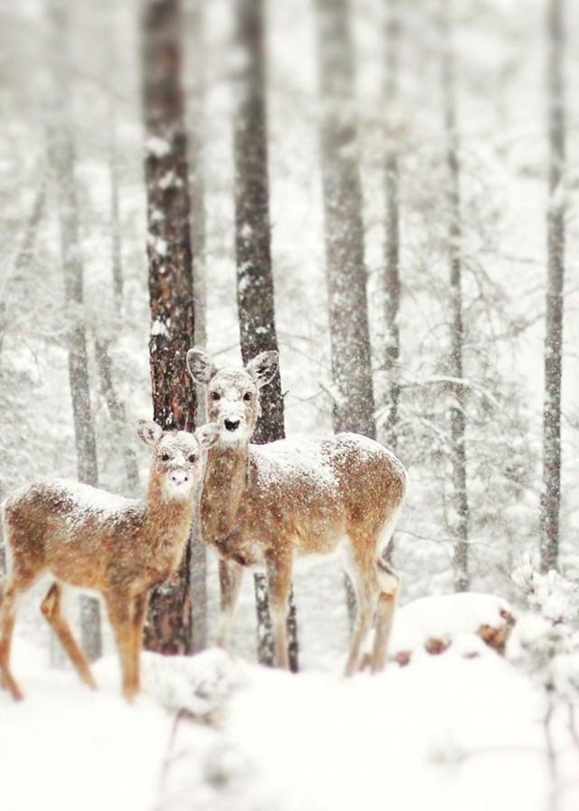 100 самых красивых зимних фотографии: пейзажи, звери и вообще 0 10f5bf cdc3b4e7 orig