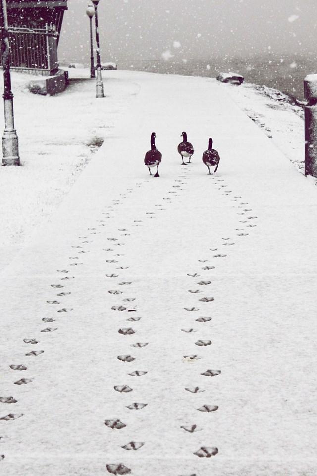 100 самых красивых зимних фотографии: пейзажи, звери и вообще 0 10f5c2 2b110c40 orig