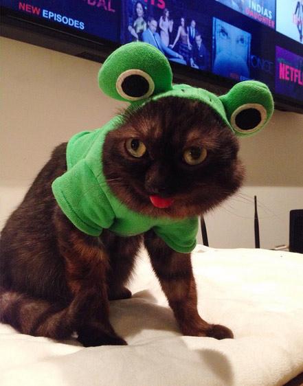 Кот с высунутым языком