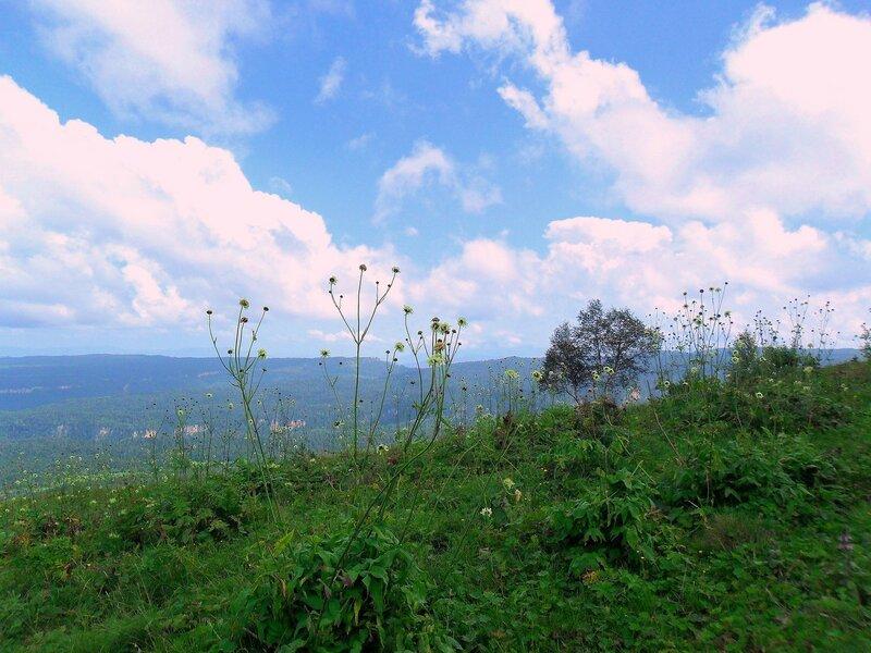Травы на плато ... SAM_0797.JPG