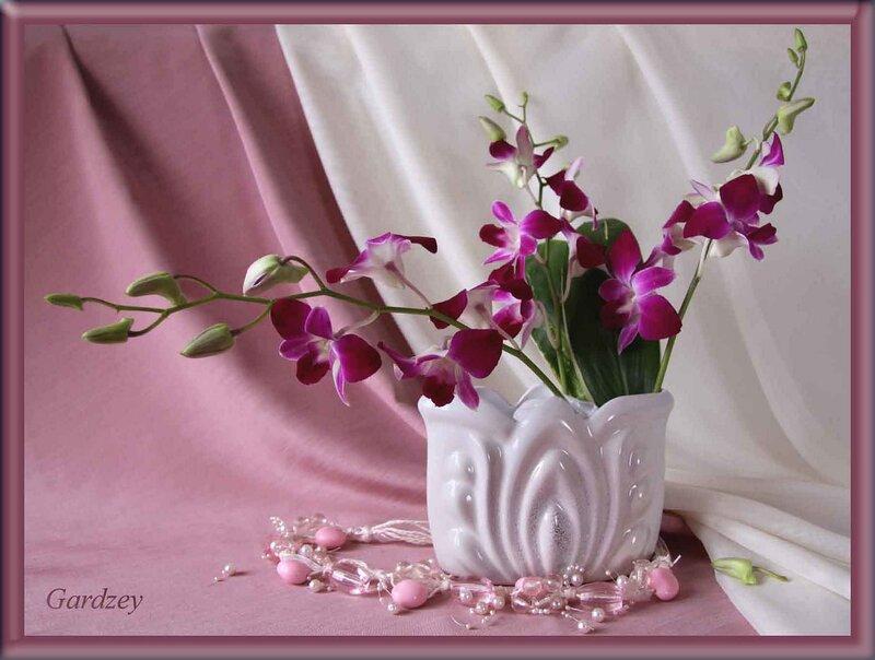 Этюд с орхидеями!
