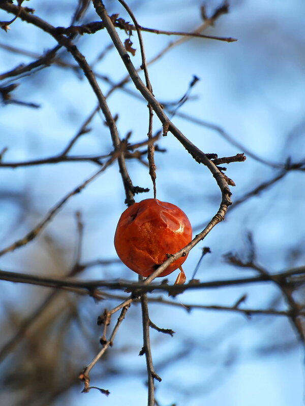 Зимнее яблоко.