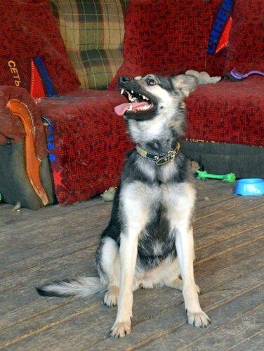 Бэмби собака из приюта москва