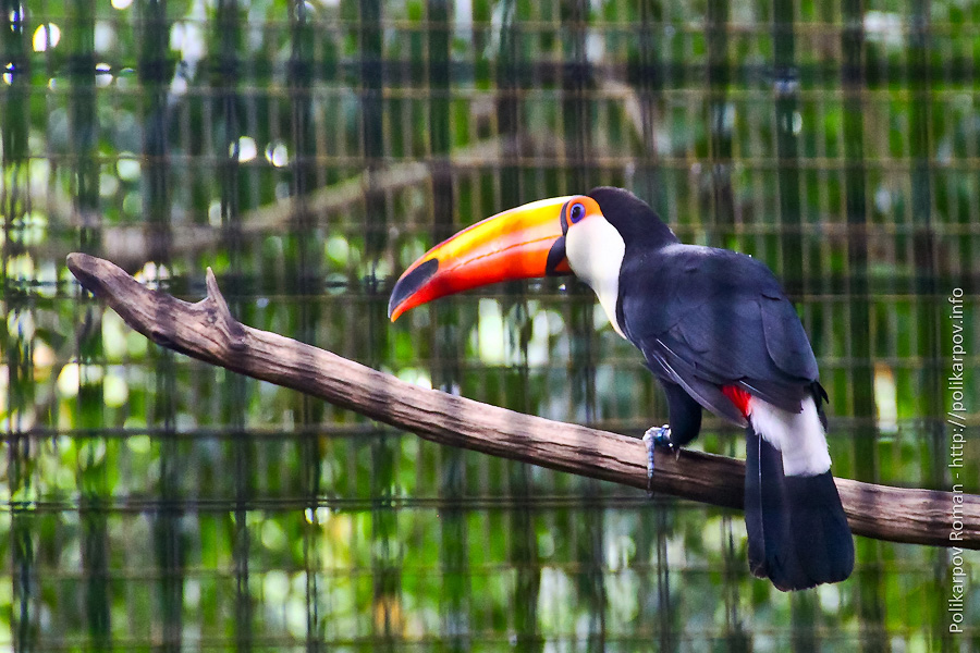 0 c4fdc cfd7ad71 orig Парк птиц Jurong в Сингапуре