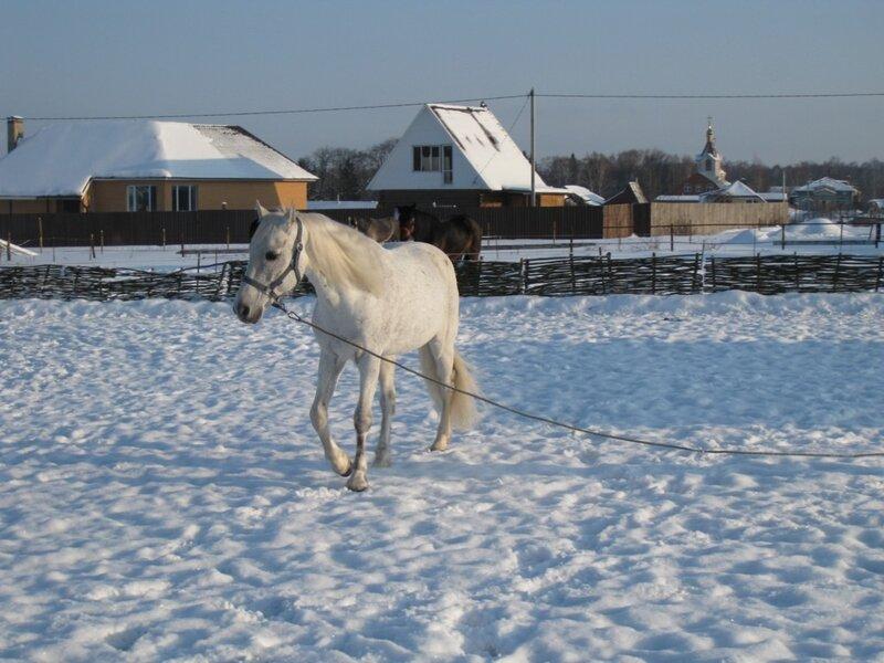 """Занятия с лошадью в КК """"Черный кабанчик"""""""